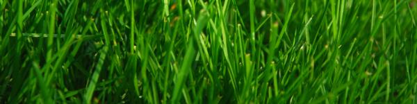 lawn header
