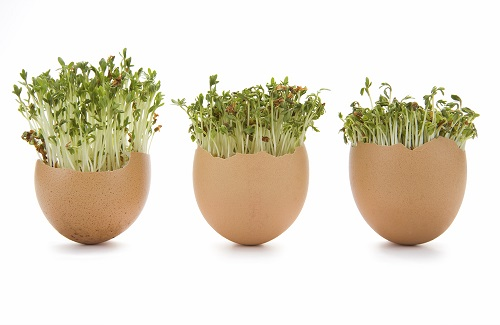 egg_cress_heads