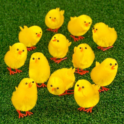 Easter Chicks 12 Pack