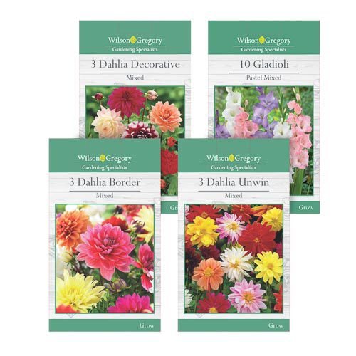 DAHLIA/GLADIOLI BULBS ASSORTMENT