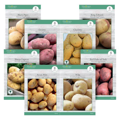 ASSORTED POTATOE BULBS