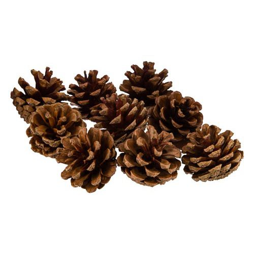 Craft Pinecones